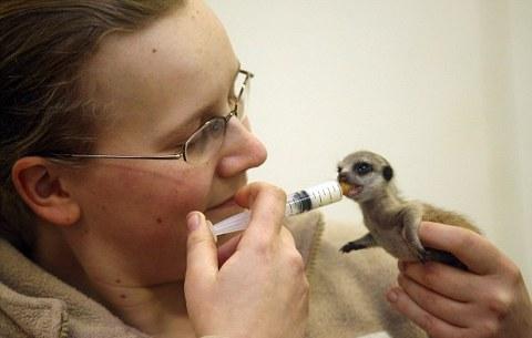 marmotta-animale-neonata-foto-02