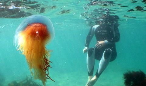 meduse-gran-bretagna-foto-01