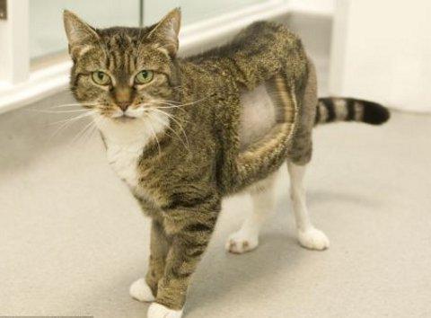missy-gatto-bionico-foto-01