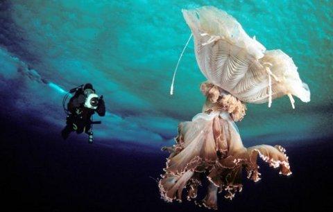 norbert-wu-foto-subacquee-oceano-antartico-05