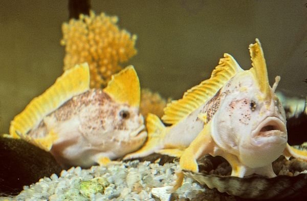 nuova-specie-tasmania-animale-pesce-zampe-foto-01
