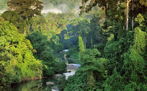 nuove-specie-animali-foresta-borneo-scoperta-foto-01