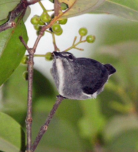 nuove-specie-animali-foresta-borneo-scoperta-foto-02