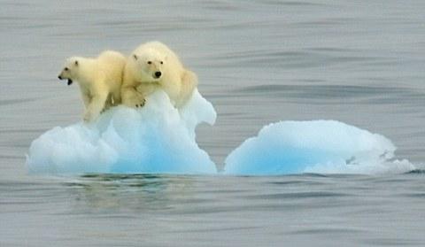 orsi-polari-intrappolati-su-iceberg-01
