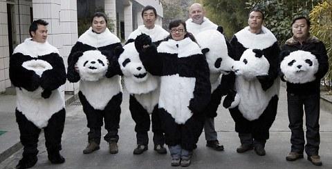 panda-esperimento-cina-scienziati-travestimento-foto-02