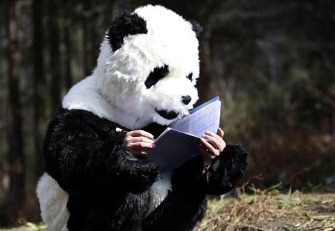 panda-esperimento-cina-scienziati-travestimento-foto-03