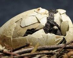 pinguino-foto-nascita-uovo-01