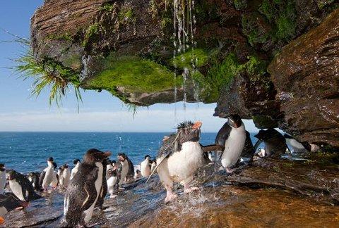 pinguino-imperatore-foto-doccia-01