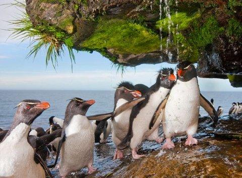 pinguino-imperatore-foto-doccia-02