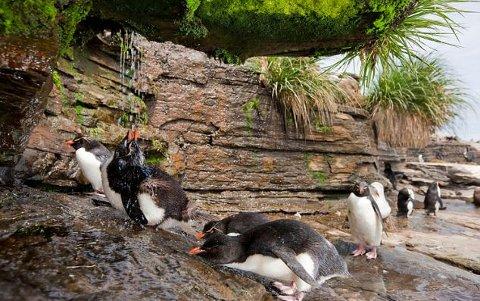 pinguino-imperatore-foto-doccia-03