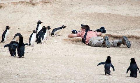 pinguino-imperatore-foto-doccia-04