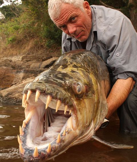piranha-gigante-foto01