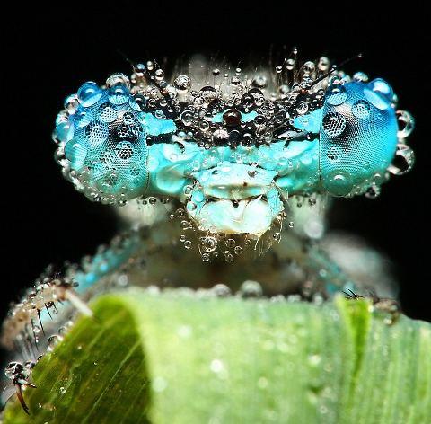 rugiada-foto-immagini-pic-insetti-Swietek-04