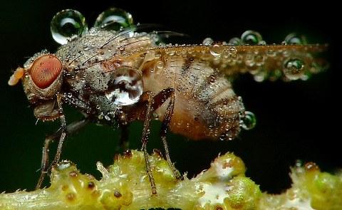 rugiada-foto-immagini-pic-insetti-Swietek-05