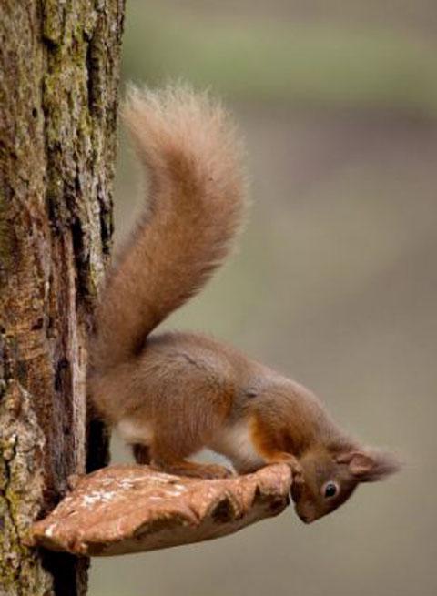 scoiattolo-furbo-foto-01
