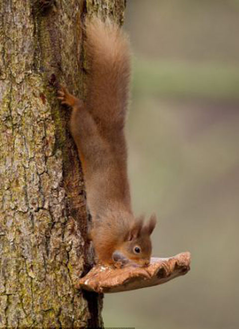 scoiattolo-furbo-foto-02