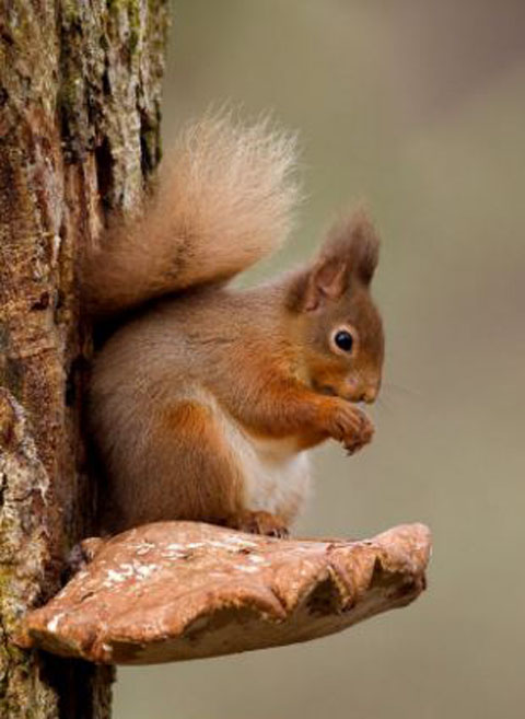 scoiattolo-furbo-foto-03
