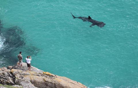 squalo-elefante-riva-foto-01