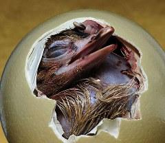 struzzo-foto-nascita-uovo-02