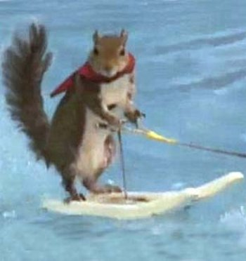 twiggy-scoiattolo-video-sci-nautico