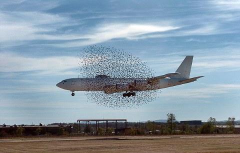 uccelli-aereo-jet-01