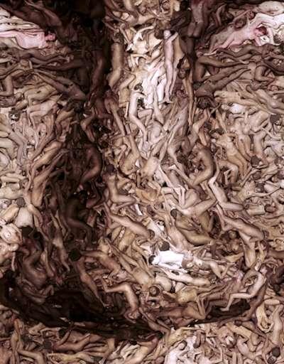 Andreas-Smetana-disegna-Cathy-Freeman-photo-editing_02