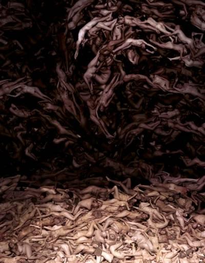 Andreas-Smetana-disegna-Cathy-Freeman-photo-editing_04