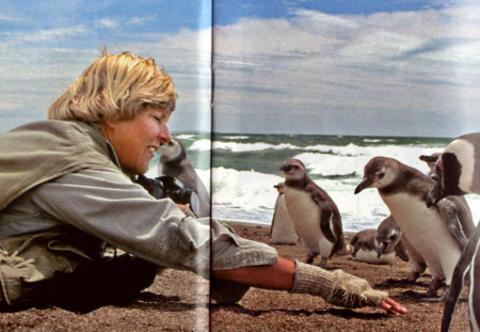 Dee-Boersma-in-patagonia-a-studiare-il-comportamento-dei-pingioni-di-magellano