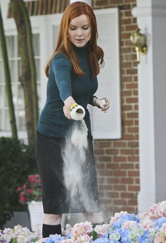 Nicolette-Sheridan-Desperate-Housewives-funerale