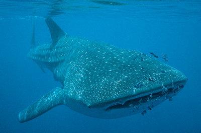 balene-in-pericolo-argentina