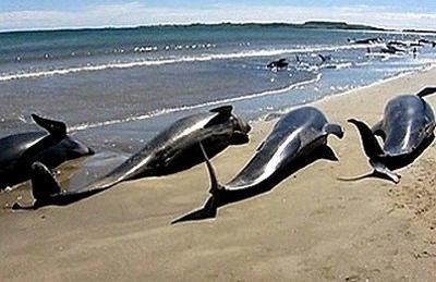 balene-spiaggiate-sud-africa