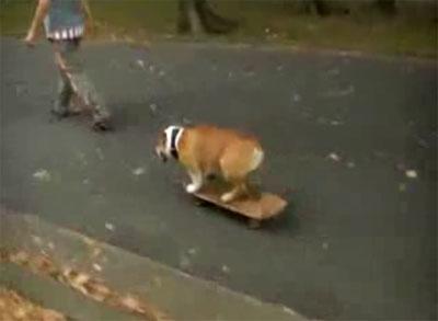 bazooka-skateboard-cane-dog
