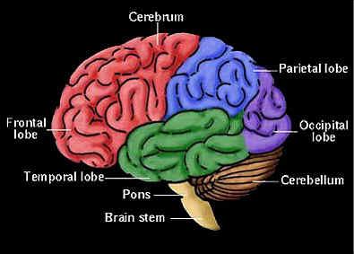 cervello-microchip