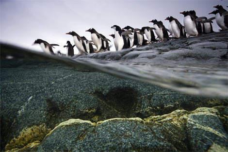 colonia-pinguini-gentoo