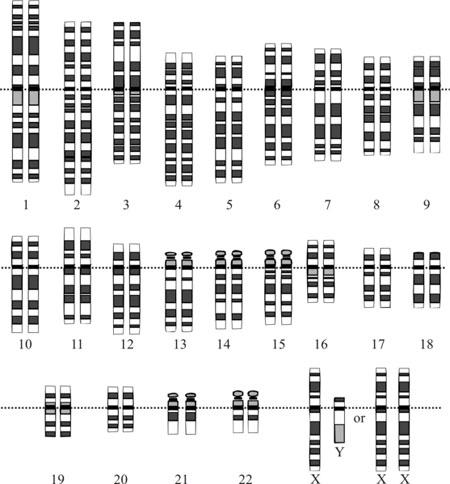 corredo-genetico-uomo-cromosomi