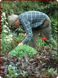 giardiniere-vecchio