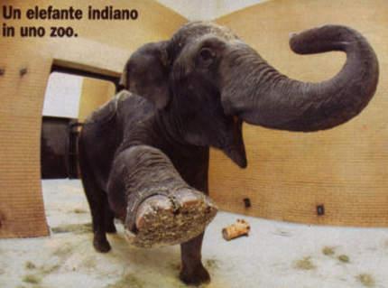 gli-elefanti-nrgli-zoo-vivono-meno