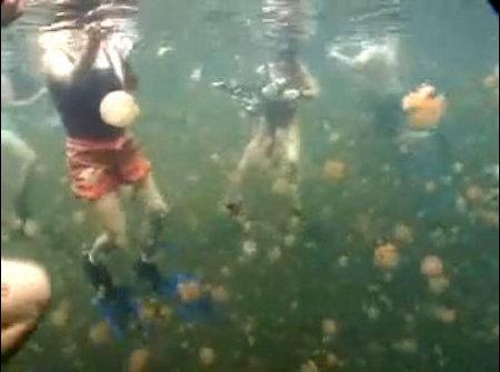 jellyfish-lake-meduse