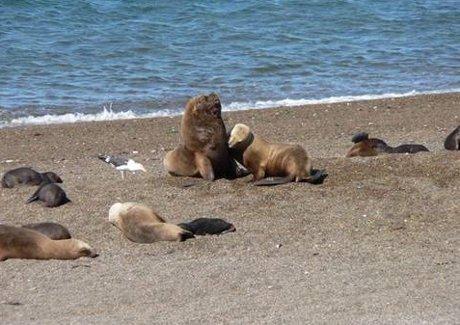 leoni-marini-cile-moria-inquinamento