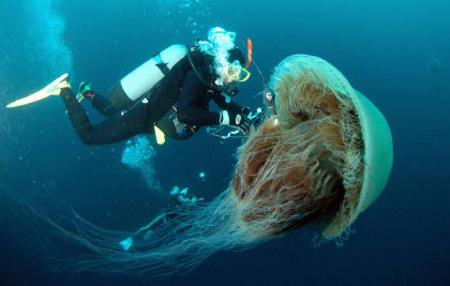 medusa-di-Echizen