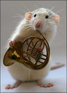 orchestra-topi-rat-01