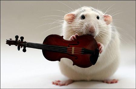 orchestra-topi-rat-02
