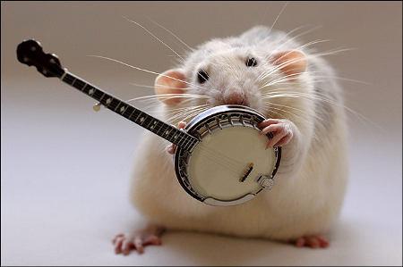 orchestra-topi-rat-03