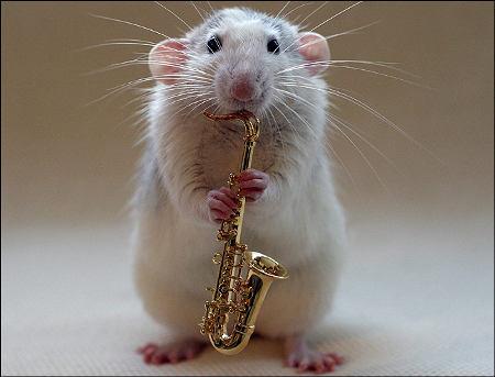orchestra-topi-rat-04