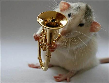 orchestra-topi-rat-09