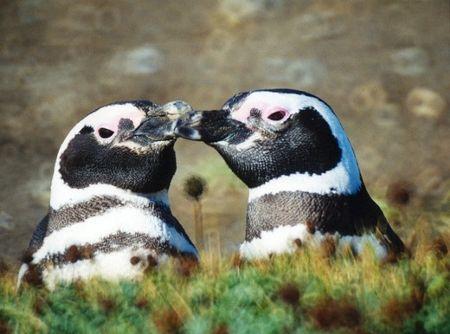 pinguini-alla-riscossa-