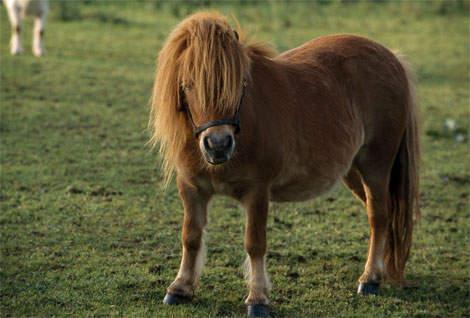 pony-kentucky-lexington