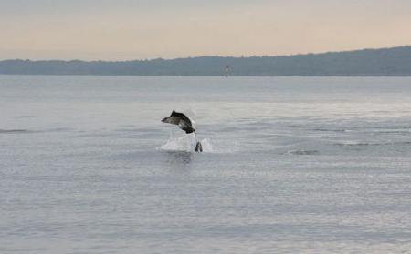 razza-orca-foto-salto-auckland