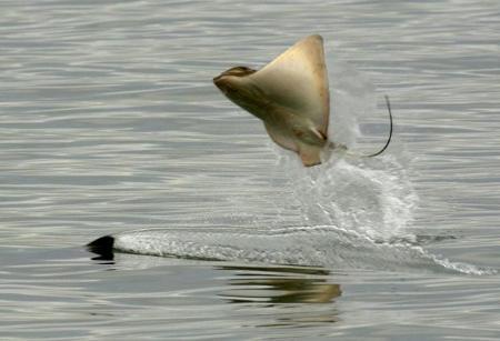razza-orca-foto-salto