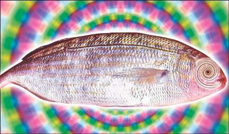 sarpa-salpa-pesce-allucinogeno-lsd-alterazione